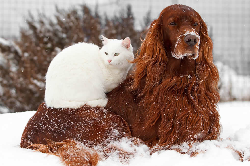 Dog-and-Cat-Winter